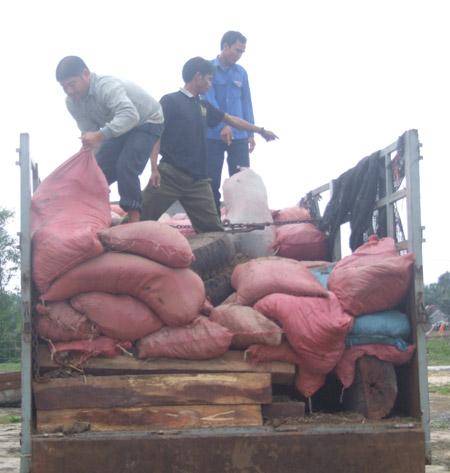 Xe chở gỗ quý, ngụy trang các bao phân bò phía trên.