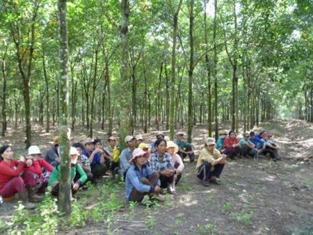 Người lao động ở Công ty Đông Nam Long trong vườn cao su.  Minh Phương/VTC