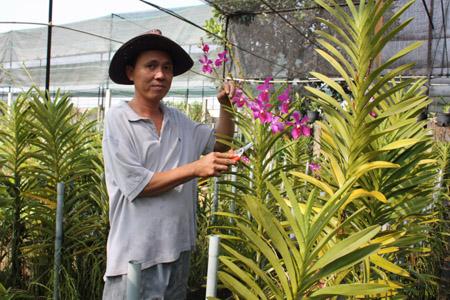 Mỗi năm vườn lan đem về cho gia đình anh Hiếu lợi nhuận gần 200 triệu đồng.