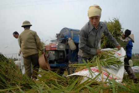 Lãnh đạo các địa phương đề nghị việc hỗ trợ nông dân cần phải được thực hiện mạnh hơn, thường xuyên hơn.