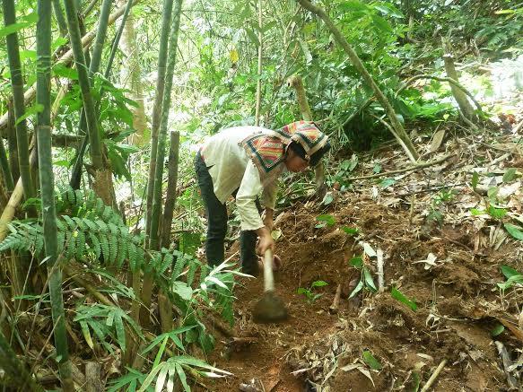 Người dân tiến hành trồng cây.