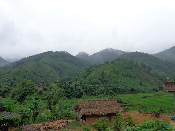 Rừng xanh mát mắt ở Quảng Trị.