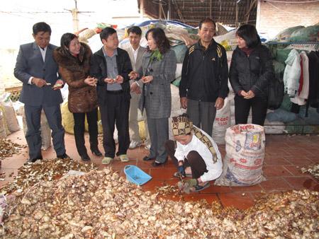 Mô hình trồng và chế biến dược liệu ở xã Bình Minh, huyện Khoái Châu, Hưng Yên do Quỹ HTND T.Ư Hội đầu tư.