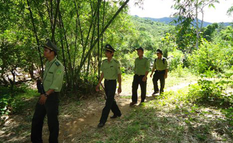 Rừng cần được bảo vệ nghiêm ngặt (Nguồn ảnh: CAND)