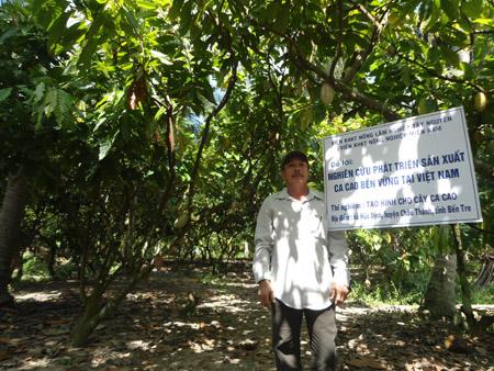 Ca cao trồng xen vườn dừa mang lại thu nhập ổn định.