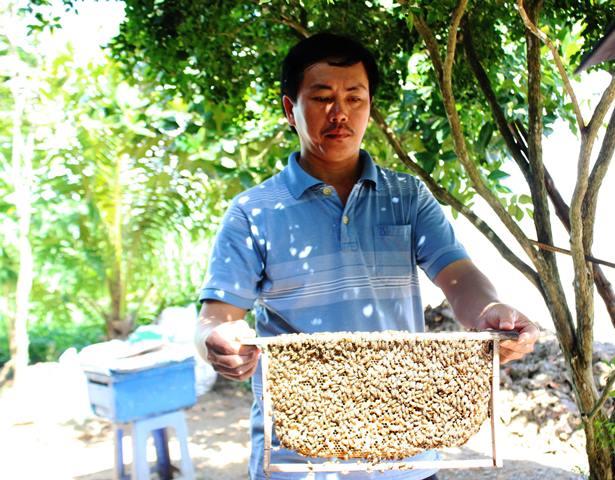 """Bán mật ong """"non"""", doanh nghiệp Việt bị nhiều thị trường cảnh báo"""