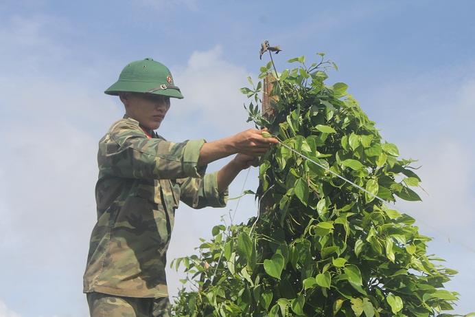 Một chiến sỹ đang kéo lại dây làm chặt các trụ tiêu mới dựng