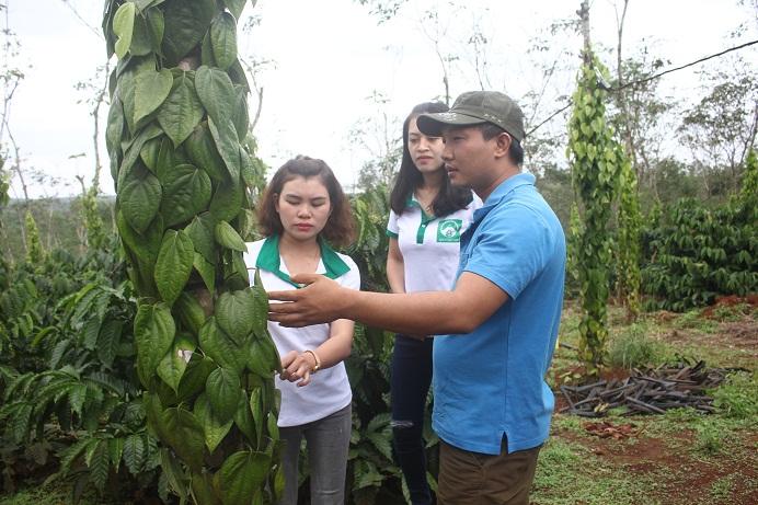 Anh Trì đang trao đổi kinh nghiệm trồng tiêu theo phương pháp nông sản sạch với đối tác