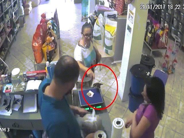 Chim bay vào cửa hàng, cướp tiền của khách