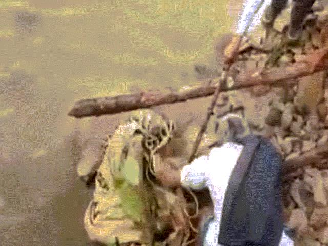 Báo đốm bị thương bất ngờ vùng dậy tấn công người giải cứu