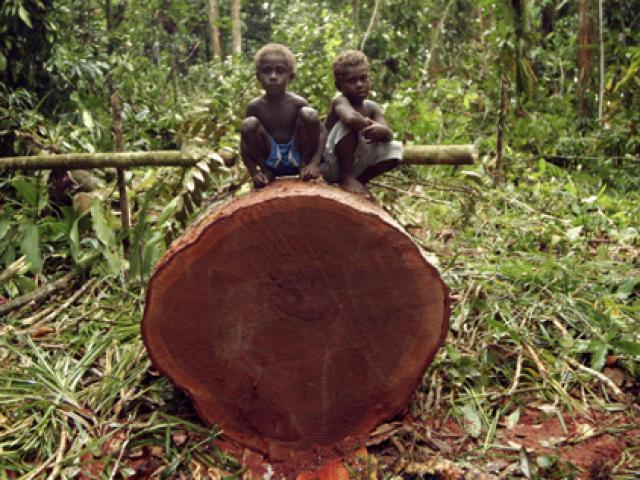 """Quốc gia sắp mất sạch rừng vì công ty Trung Quốc """"càn quét"""""""