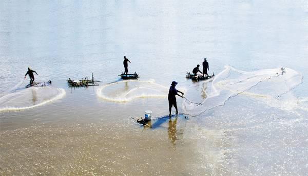 Miền Tây mùa nước nổi: Cá linh mùa lũ, nhưng có mấy loại cá linh?