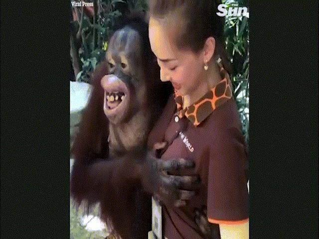"""Sờ ngực nữ nhân viên vườn thú, đười ươi """"cười hớn hở"""""""