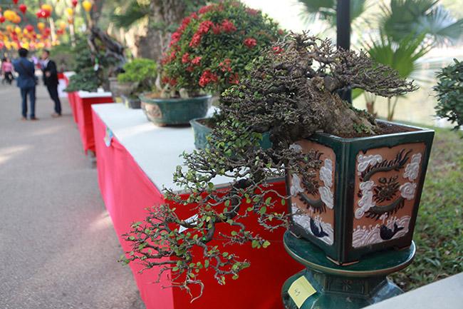 dan cay bonsai