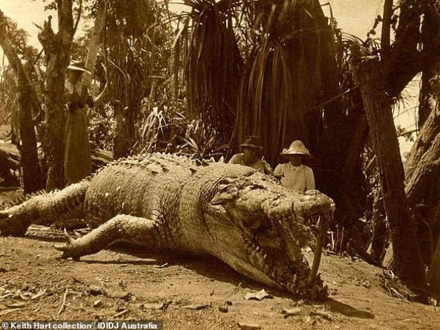 Người phụ nữ hạ cá sấu khổng lồ dài 8,6 mét bằng một phát đạn