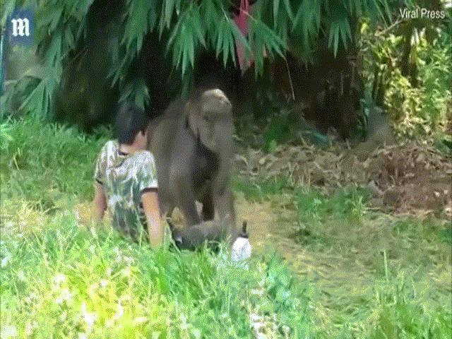 Con voi được giải cứu, chăm sóc và chuyện lạ xảy ra khi được thả về với đàn