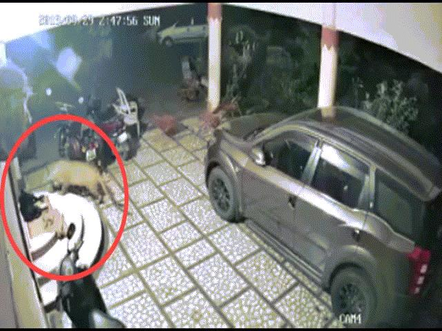 Rợn người cảnh báo đốm mò vào nhà tấn công chó