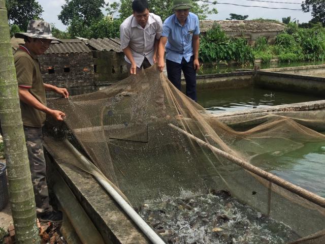 Một năm nuôi 20 tấn cá rô đồng, kéo mẻ lưới cả làng đến xem