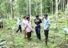 Dân sung túc nhờ cây thuốc quý giá nửa triệu/kg