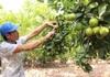 Làm gì để Nông nghiệp Việt Nam trong tốp 15 nước phát triển nhất thế giới?
