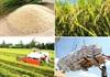 Giá nông sản hôm nay (15/1): Lợn hơi lên mức cao nhất 86.000 đồng/kg, lúa gạo ổn định