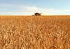 Xuất khẩu lúa mì từ Australia sang Trung Quốc tăng trưởng mạnh
