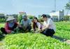 Tiếp vốn đến tận vùng sâu, vùng xa - Agribank Phú Yên giúp người dân đẩy lùi tín dụng đen