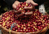 Giá nông sản hôm nay 18/9: Giá tiêu cao nhất 80.500 đồng/kg, nguồn cung cà phê toàn cầu bị thắt chặt