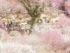 Cùng ngắm hoa mơ nhiều màu sắc tuyệt đẹp tại Nhật Bản