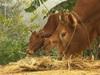 Lào Cai: Áp dụng chặt chẽ các biện pháp an toàn dịch bệnh trong chăn nuôi, Tả Gia Khâu vươn lên thoát nghèo thần kỳ