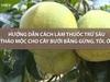 Hướng dẫn làm thuốc trừ sâu hữu cơ cho cây bưởi bằng gừng, tỏi, ớt đơn giản