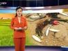 Bản tin Thời sự Dân Việt 10/4: Truy tìm nguyên nhân cá chết hàng loạt ở Thanh Hóa, Nghệ An