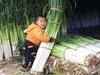 """Chiêm ngưỡng những cây hành lá """"đột biến"""", cao hơn 2 mét và nặng 1,5 kg"""