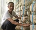Cựu binh khởi nghiệp ở tuổi 60 với nấm sò