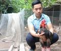 Đi sau vẫn thành công nhờ áp dụng 4.0 vào nuôi gà Đông Tảo