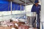 Nghịch lý nhà băng thừa tiền nhà nông thiếu vốn