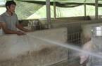 Chàng 'lái lợn' thành ông chủ trang trại