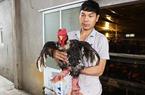 Thành công nhờ thụ tinh cho gà Đông Tảo