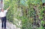 Hà Tĩnh xây dựng nông thôn mới hàng rào cũng hái ra tiền