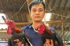 Thu tiền tỷ nhờ bí quyết nuôi gà Đông Tảo