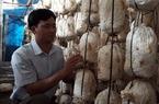 Thành tỉ phú trồng nấm vì vợ thích ăn nấm