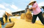 Lúa gạo Việt: Chật vật trên đồng làng, chông chênh nơi biển lớn