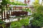Ngỡ ngàng vườn rau trồng trên sân thượng nhà của nữ Giám đốc doanh nghiệp