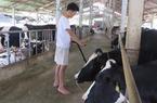 Liên kết chăn nuôi bò sữa hướng đi mới ở Trác Văn