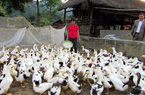 Xã Đồng Yên hướng tới xây dựng xã Nông thôn mới kiểu mẫu