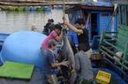 Đánh bắt cá ngừ ở Bình Định, trái vụ trúng đậm, chính vụ thất bát