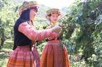 Ngày hội hái mận náo nhiệt Cao nguyên Mộc Châu