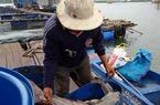 Bà Rịa - Vũng Tàu cắt giảm 50% lồng bè nuôi thủy sản trên sông Chà Và