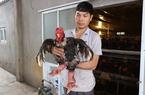 Bí quyết thu lãi nửa tỉ đồng mỗi năm từ nuôi gà Đông Tảo