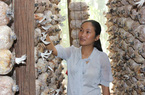 Cử nhân bỏ phố về trồng nấm sạch thu nhập gần 400 triệu/năm